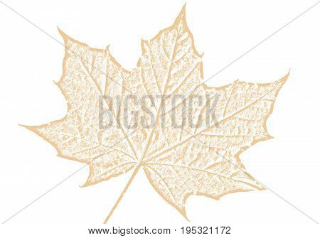 Maple leaf brown sketch drawing cut out and isolated on a white background