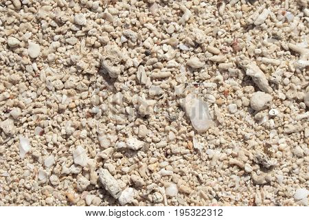 White coral beach background. Coral sand texture on seaside under tropical sun. Sunny day by sea on exotic island concept image. Natural sand texture with bare foot step marks for banner template