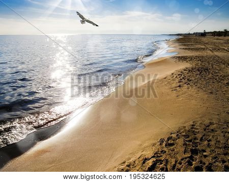 golden color sandy beach and flying seagull over clear sky