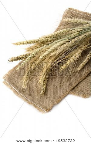 Bundle of wheat ears isolated on cereal background
