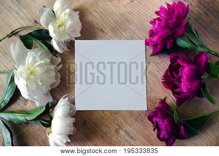 Frame of peony white and lilac colors on a wooden board with blank white greeting card. Flowers texture. Flat lay top view.