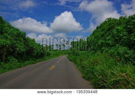 Paved road in the coast, surrounded with abundat vegetation in a sunny day in the Ecuadorian coasts.