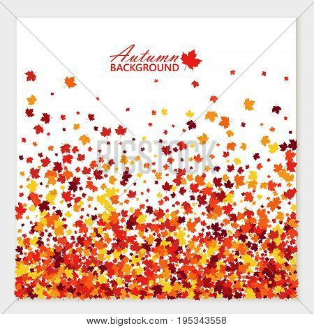 Autumn festive banner with scattered maple leaves in traditional Fall colors - orange yellow red brown. Vector illustration. Isolated