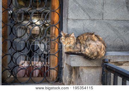 Undomestic cat sleeping on streets of Tbilisi, Georgia.