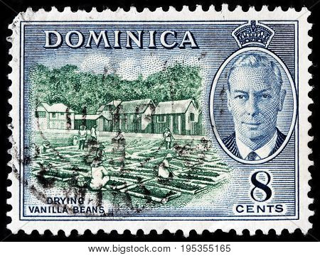 LUGA RUSSIA - APRIL 26 2017: A stamp printed by DOMINICA shows portrait of King George VI against beautiful view of drying vanilla beans circa 1951.