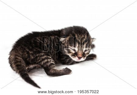 The cute little kitten with closed eyes