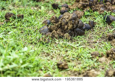 Close-up shot of feces of a horse on a green grass background.