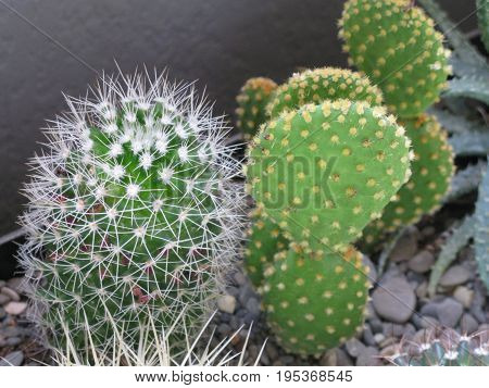 botanics cactus carbon desert dioxide green loss macro plant spines water