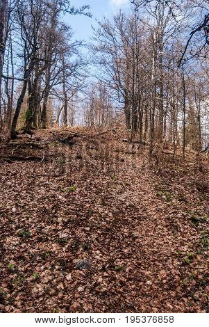 spring mountain deciduous forest with hiking trail covered by fallen leaves and blue sky near Jarabina hill in Velka Fatra mountains in Slovakia