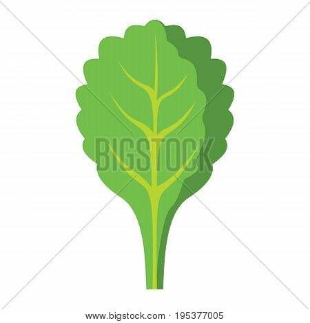 Spinach icon in cartoon flat style isolated object vegetable organic eco bio product from the farm vector illustration. Tomato object for vegetarian