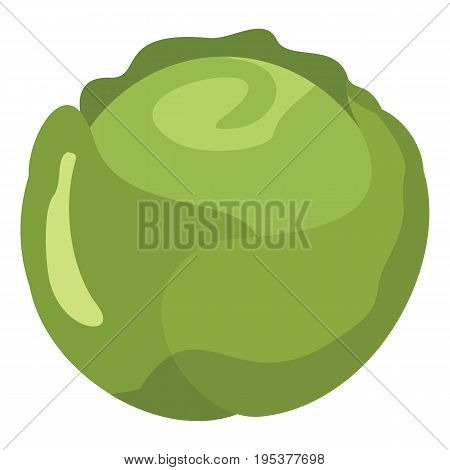 Cabbage icon in cartoon flat style isolated object vegetable organic eco bio product from the farm vector illustration. Cabbage object for vegetarian design