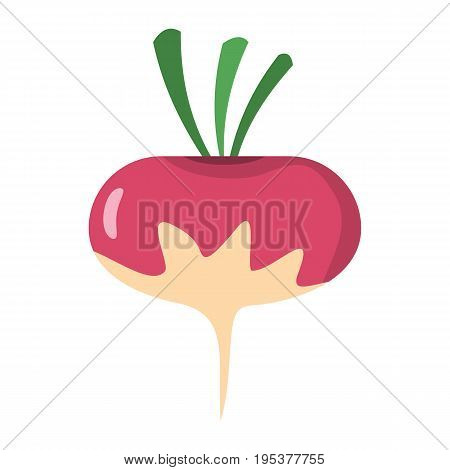 Radish icon in cartoon flat style isolated object vegetable organic eco bio product from the farm vector illustration. Radish object for vegetarian design