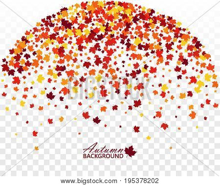 Autumn banner with scattered maple leaves on transparent background. Vector illustration. Isolated