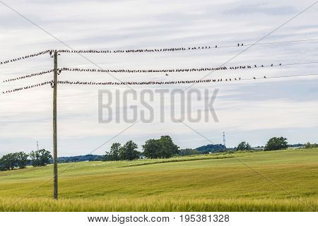 the sparrows sits on the telegraph wires