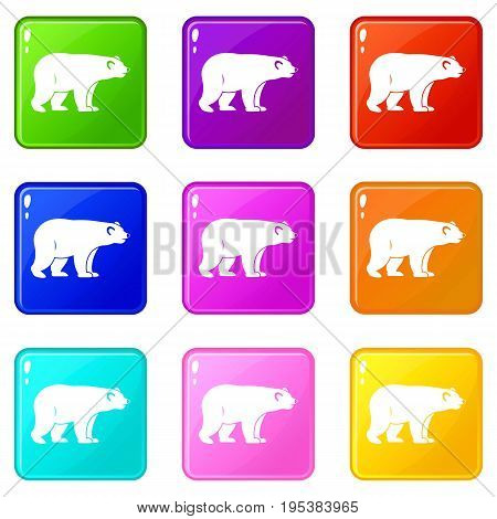 Wild bear icons of 9 color set isolated vector illustration