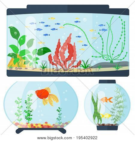 Transparent aquarium vector illustration underwater fish tank bowl habitat house. Tropical sea aquatic cartoon water tank freshwater glass fishbowl.