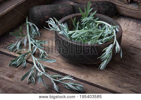 Branch Of Medicinal Wormwood