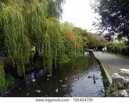 Weeping Willow tree over the River Avon, Christchurch, Dorset