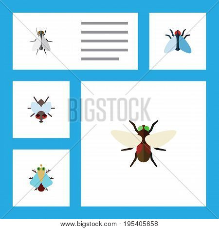 Flat Icon Buzz Set Of Tiny, Housefly, Bluebottle And Other Vector Objects. Also Includes Buzz, Insect, Housefly Elements.