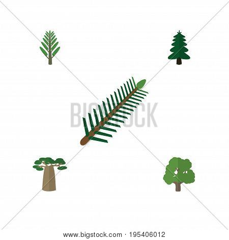 Flat Icon Bio Set Of Jungle, Park, Decoration Tree And Other Vector Objects. Also Includes Willow, Leaves, Wood Elements.