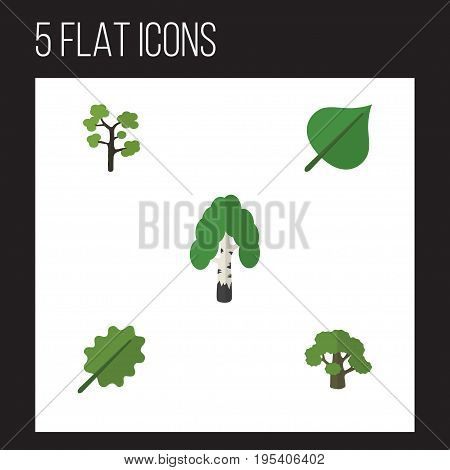 Flat Icon Ecology Set Of Tree, Timber, Hickory And Other Vector Objects. Also Includes Tree, Evergreen, Forest Elements.