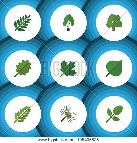 Flat Icon Nature Set Of Timber, Leaves, Alder And Other Vector Objects. Also Includes Tree, Acacia, Foliage Elements.