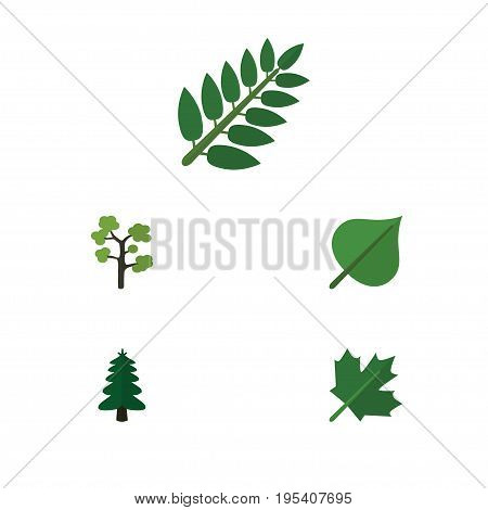 Flat Icon Ecology Set Of Oaken, Garden, Park And Other Vector Objects. Also Includes Oaken, Tree, Foliage Elements.