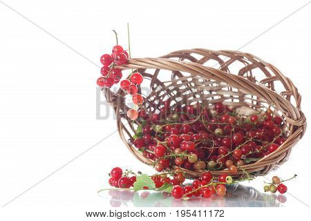 Ripe Red Currant In A Basket