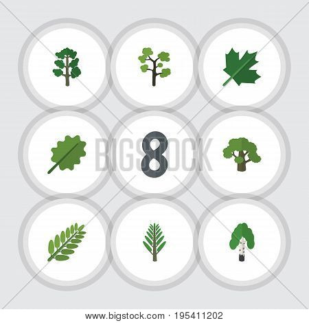 Flat Icon Nature Set Of Jungle, Oaken, Garden And Other Vector Objects. Also Includes Oak, Birch, Leaves Elements.