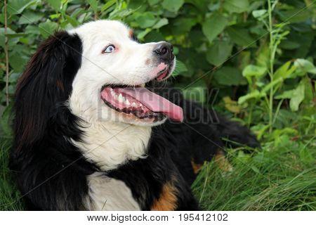 Beautiful Dog In The Garden