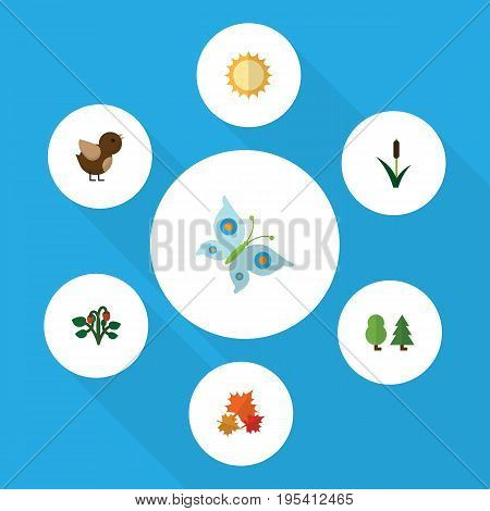 Flat Icon Ecology Set Of Berry, Canadian, Cattail And Other Vector Objects. Also Includes Sun, Canadian, Bird Elements.