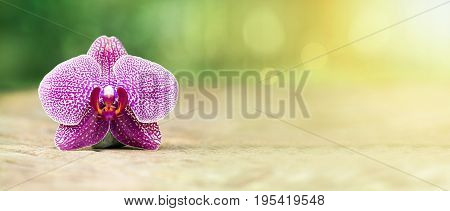 Harmony - website banner of purple orchid flower in Summer