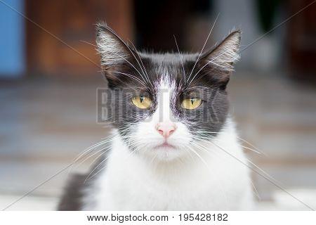 Portrait of a sad cat sitting on the street