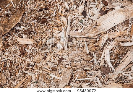 A Flat Background With Texture Of Fresh Wooden Scobs