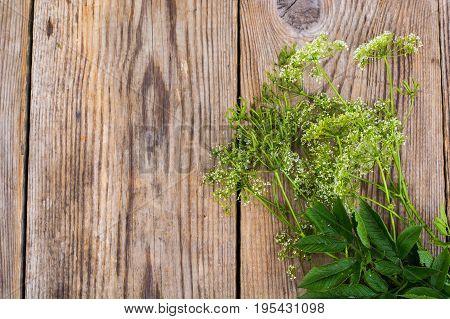 Summer wildflowers on wooden table. Studio Photo