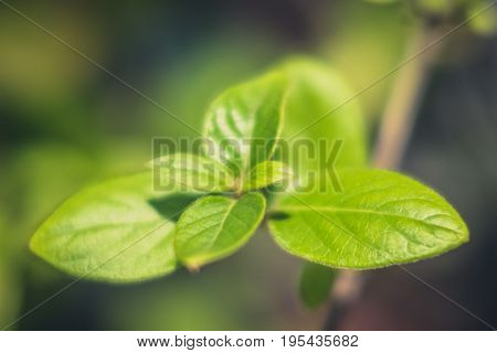 plant leaf closeup - green leaves macro