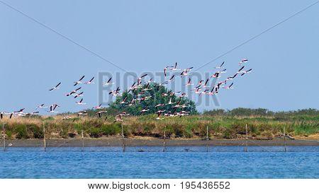 Flock Of Pink Flamingos.po River Lagoon