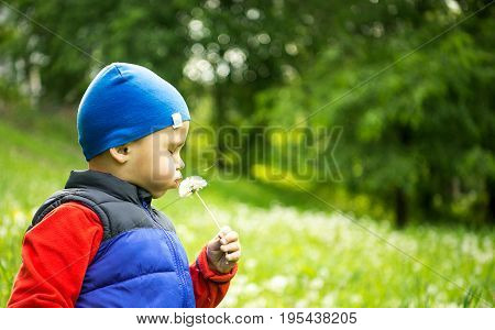 Little boy 4 - 5 years old playing outdoor on background. Young Boy Sitting In Field Blowing Dandelion. One person, caucasian. white.