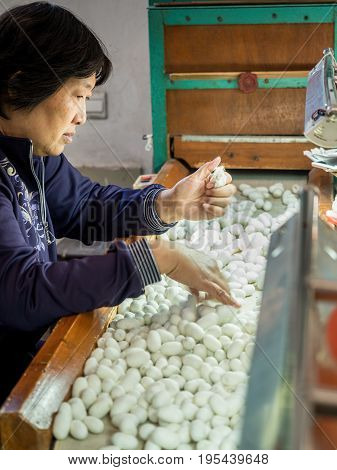 Suzhou, China - Nov 5, 2016: At Suzhou Number 1 Silk Factory; lady worker sorting through silk cocoons. Low-light and shallow depth of field image.