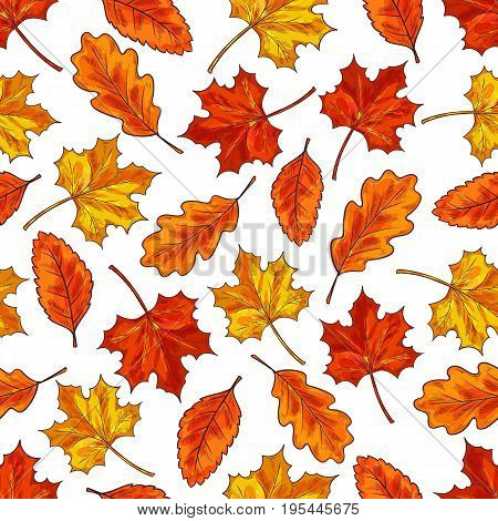 Autumn leaf seamless pattern background. Orange fallen leaves of maple, oak and birch trees. Autumn fallen leaves sketch pattern for autumn season themes design
