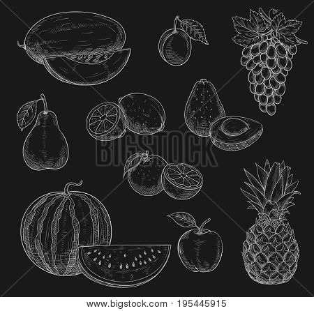 Exotic fruits chalk sketch icons on chalkboard. Vector isolated symbols of farm grown watermelon, melon and grape or tropical pineapple, apple and pear or papaya, orange or mango and avocado
