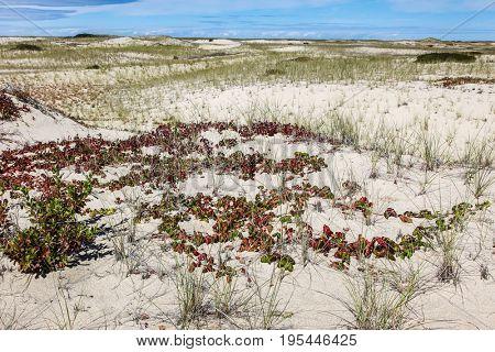 Sand dunes near Provincetown in Cape Cod, Massachusetts, USA.