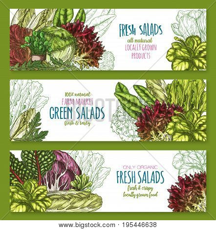 Salads banners set of arugula, broccoli and brussels sprouts or chinese napa and romanesco lettuce. Vector design of kohlrabi cabbage, pak choi kale or cauliflower and chicory veggies for farm market