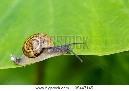Image of snail on a green leaf. Reptile Animal.