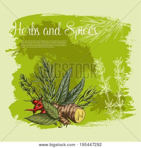 Herbs and spices fresh farm grown seasonings vector poster of peppermint, basil or ginger and bay leaf, chili pepper and tarragon. Natural spicy arugula, rosemary and lemongrass for organic market