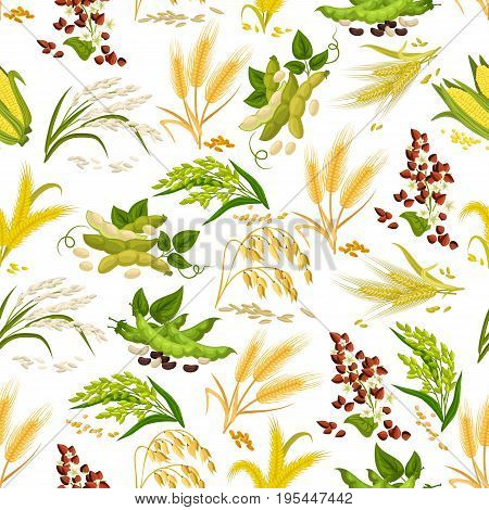 Cereals seamless pattern of wheat and rye ears, buckwheat seeds and oat or barley millet and rice sheaf, corn cob and legume beans or pea. Farmer agriculture grain plants harvest vector tile design