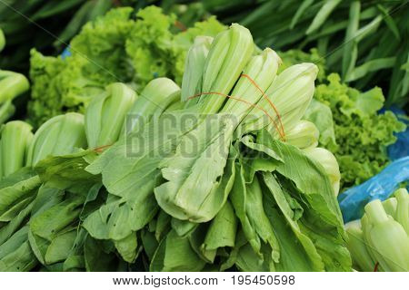 Fresh choy for cooking in the market