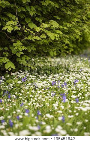 Stunning Conceptual Fresh Spring Landscape Image Of Bluebell And Wild Garlic In Forest In Bright Glo