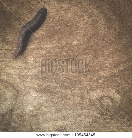 close up small slug on wood floor