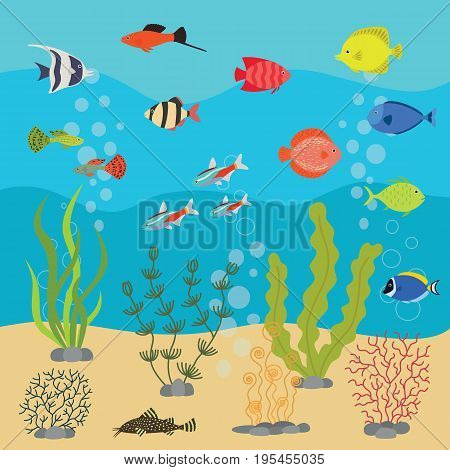 Tropical exotic fishes in aquarium or ocean underwater. Vector illustration of fish tank with colorful sea fishes and algae. Sea life background